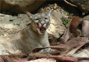 Puma senkt Jahresprognose